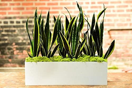 rectangular planter